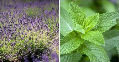 20 Best Edible Perennial Herbs To Grow In Your Garden