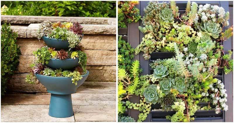 20-Brilliant-Ideas-For-DIY-Vertical-Succulent-Garden-ft