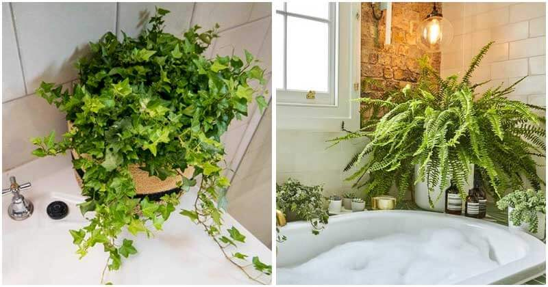 20-Plants-That-You-Should-Grow-In-Your-Bathroom-ft