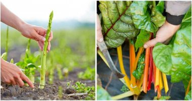 20-Veggies-That-Are-Cut-To-Come-Back-Again-ft