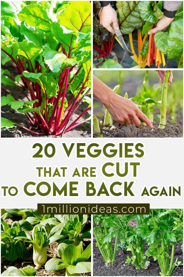 20-Veggies-That-Are-Cut-To-Come-Back-Again