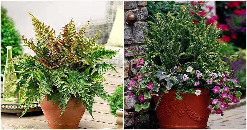 21 Best Ferns To Grow in Containers