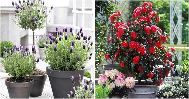30 Beautiful Shrubs To Grow In Containers