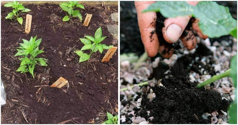 7-Amazing-Uses-Of-Coffee-Grounds-For-Your-Garden-ft