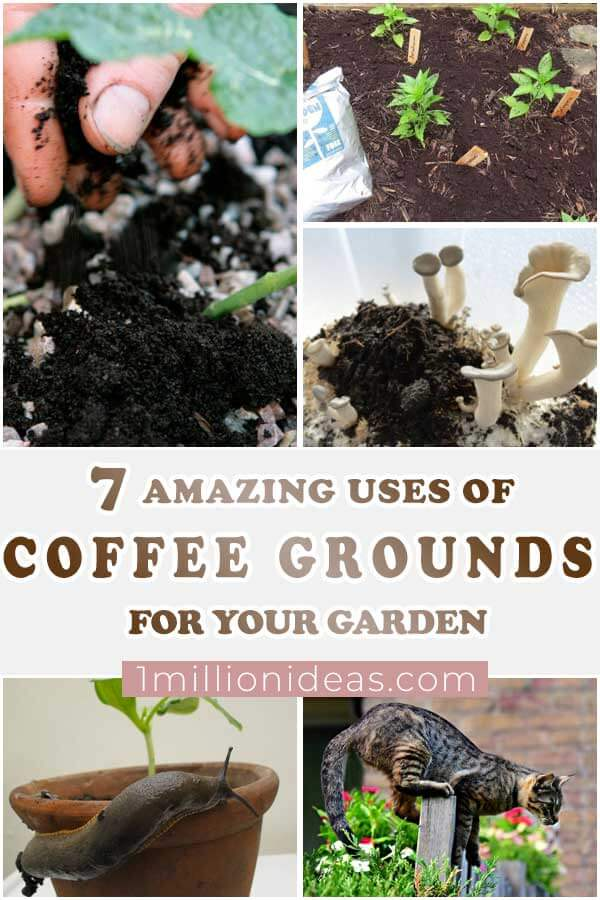 7-Amazing-Uses-Of-Coffee-Grounds-For-Your-Garden