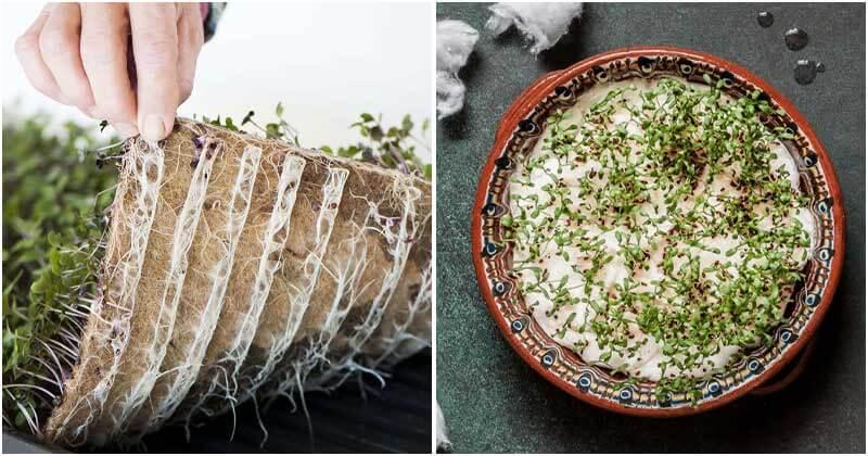 7 Inspiring Ways To Start Seeds Without Soil