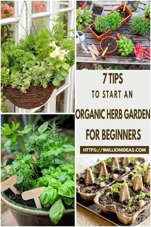 7-Tips-To-Start-An-Organic-Herb-Garden-For-Beginners