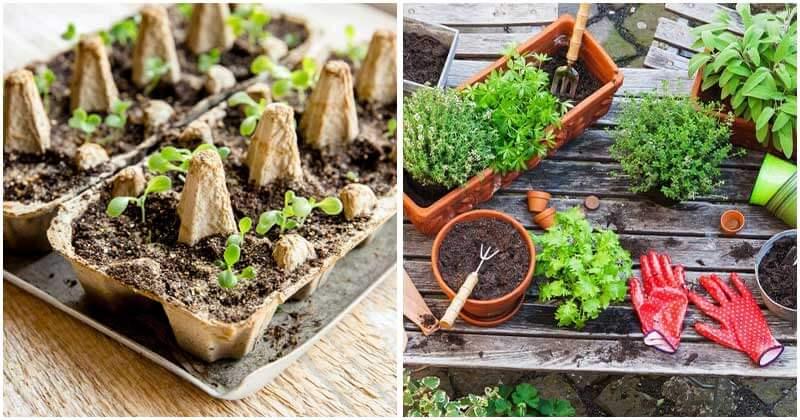 7-Tips-To-Start-An-Organic-Herb-Garden-For-Beginning-Gardeners-ft