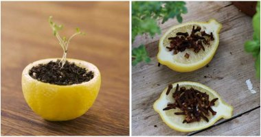8-Amazing-Uses-Of-Citrus-Peels-For-Your-Garden-ft