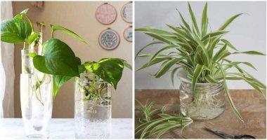 9-Best-Indoor-Plants-To-Grow-In-Water-ft