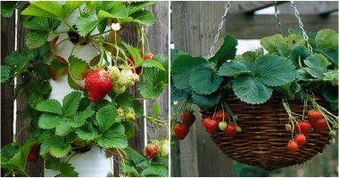 9 Easy Ways To Grow Strawberries