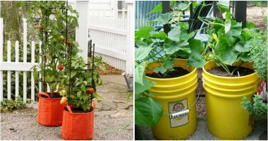 Best DIY And Cheap Container Vegetable Gardening Ideas