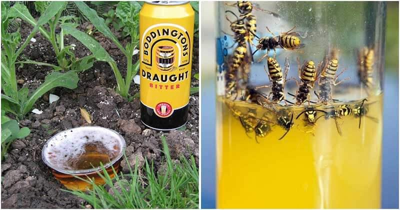 10-Amazing-Uses-Of-Beer-In-Your-Garden-ft