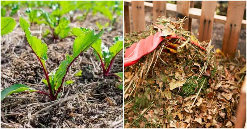10 Brilliant Ways To Use Grass Clippings