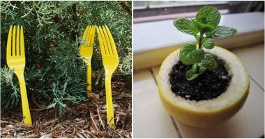 10 Cleverest Gardening Tips and Tricks for Beginners