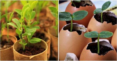 0 Easy And Simple Homemade Seed Starter Pots