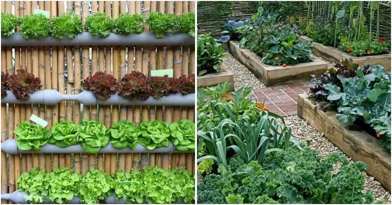 10 The Best Impressive Vegetable Garden Ideas For Garden-Lovers