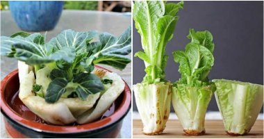 10 Vegetables Can Regrow In Water