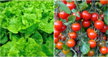 11 Easiest Vegetables To Grow