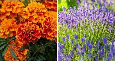12-Best-Flowers-To-Grow-In-Vegetable-Garden-ft1