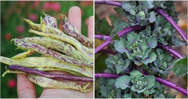 12-Unique-Vegetables-You-Should-Grow-This-Year-ft1