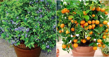 13 Easiest Fruits and Berries To Grow In Container Garden