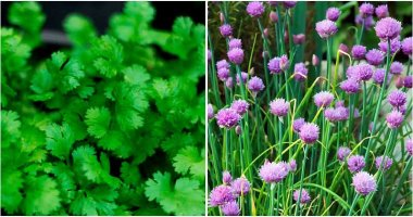 15 Herbs Can Grow Well In Shade