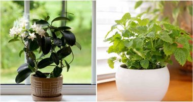 15-Best-Scented-Houseplants-That-You-Will-Love-ft