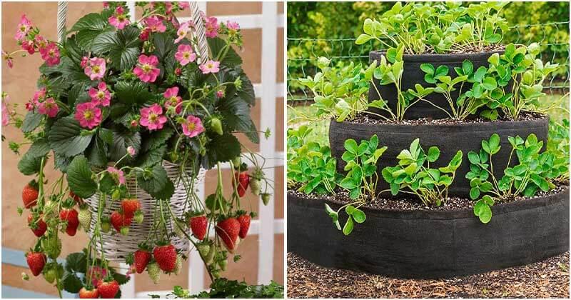 15-Creative-DIY-Strawberry-Planters-ft1