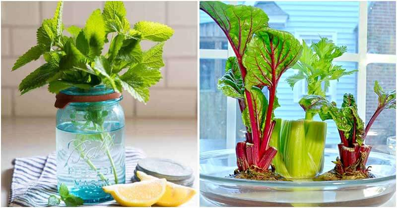 15-Herbs-And-Vegetables-That-You-Can-Grow-In-Water-ft1
