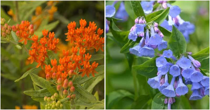 15-Perennial-Plants-To-Attract-Bees-To-Your-Garden-ft