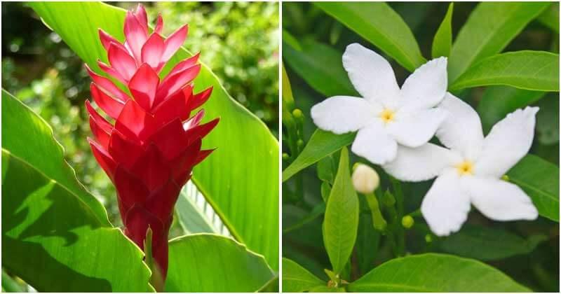 15-Stunning-Hawaiian-Flowers-ft