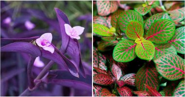 16 Exciting Dish Garden Plants