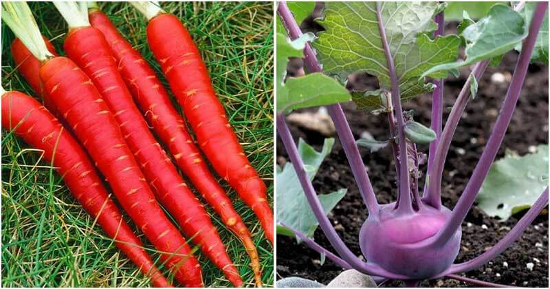 18 Most Colorful Vegetables To Make Your Garden More Attractive