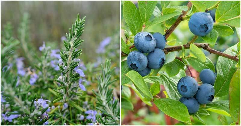 20-Plants-That-Boost-Your-Memory-And-Concentration-ft1
