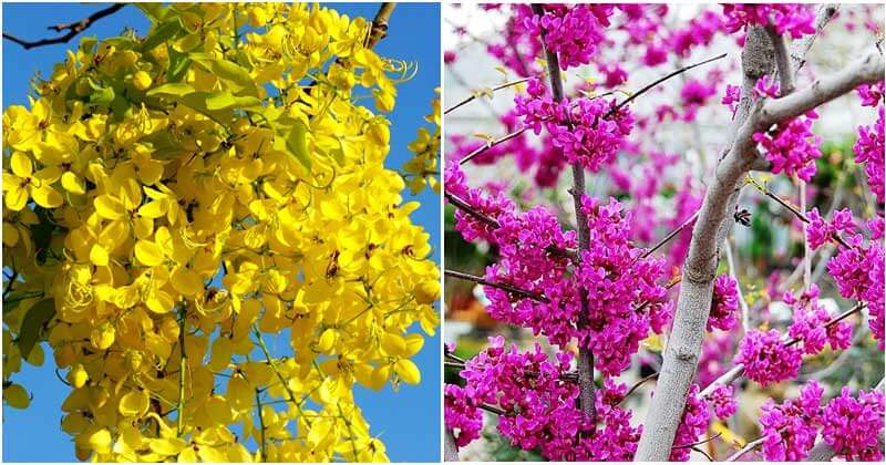25 Beautiful Trees And Shrubs That Can Bloom For The Longest Time