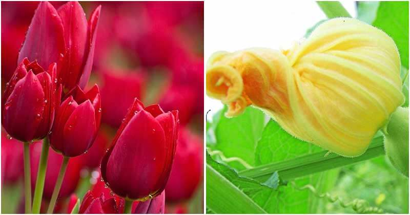 29 Edible Flowers That You Can Eat Right Out Of Garden
