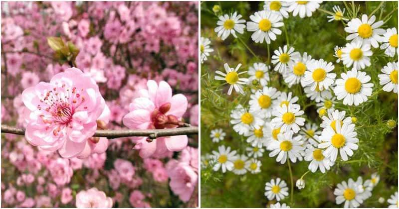 30-Beautiful-Edible-Flowers-For-Your-Garden-ft