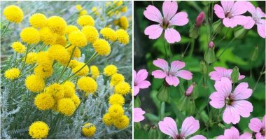 30 Best Plants Can Grow Well In Lack Of Water