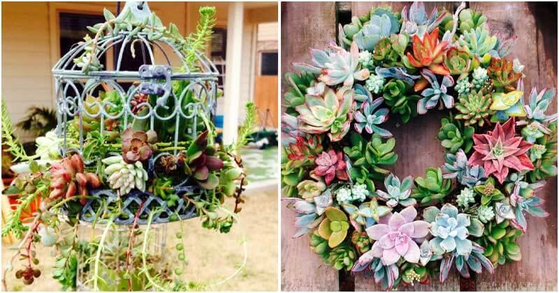 30-Cute-DIY-Succulent-Planters-ft1