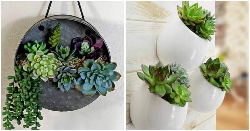30-Fantastic-Succulent-Wall-Ideas-To-Try-ft