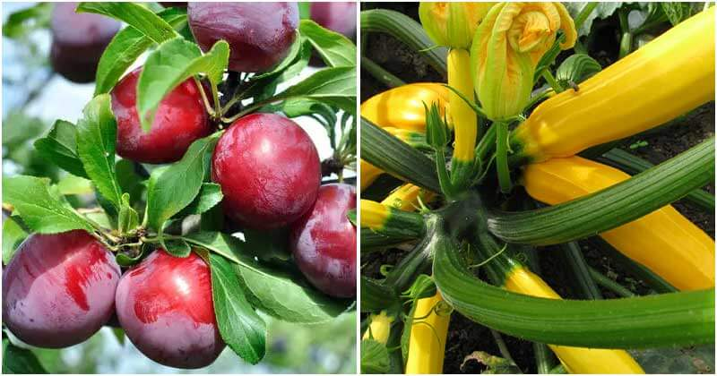 30 Fruits And Vegetables For High Yield