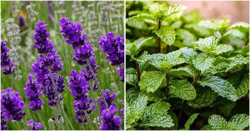 30-Medicinal-Plants-ft