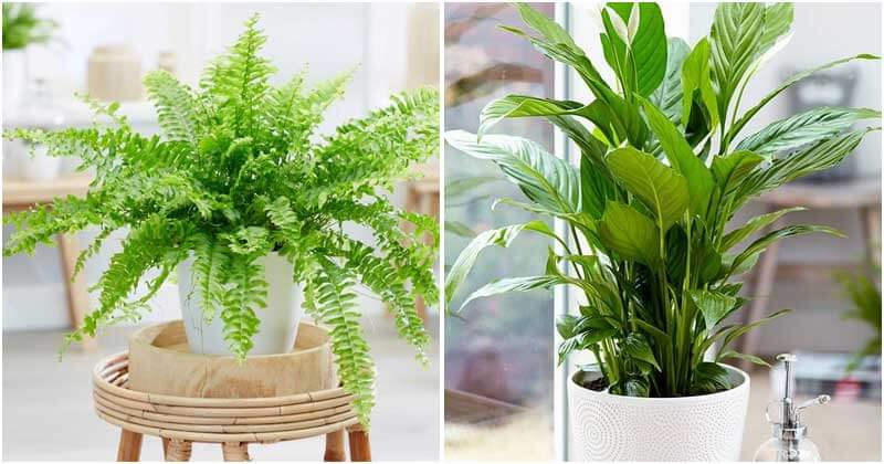 5-Sadness-Fighting-Indoor-Plants-ft