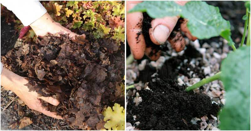 6-Natural-Materials-To-Improve-Soil-ft1
