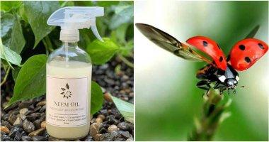 6 Ways to Repel Spider Mites