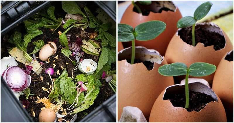 8 Best Ways For Using Eggshells In Your Garden