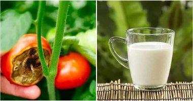8 Great Benefits When Using Milk In The Garden