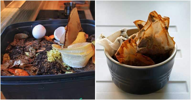 9 Things Can Be Turned Into Compost At Home That Not Everyone Knows