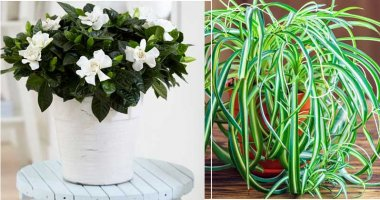 Best Bedroom Plants To Help In Purifying The Air And Improve Your Sleep